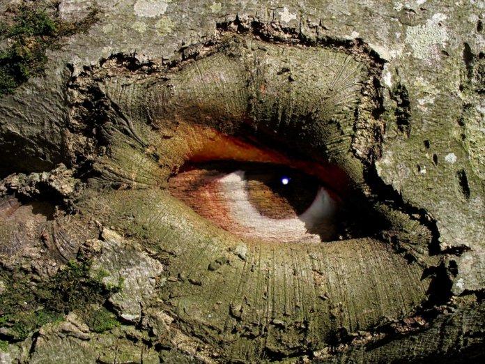 Augenhöhle (Orbita)