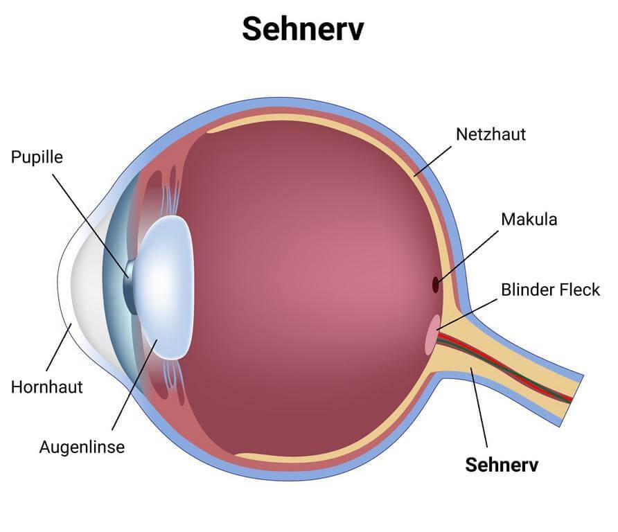 Sehnerv-Infografik