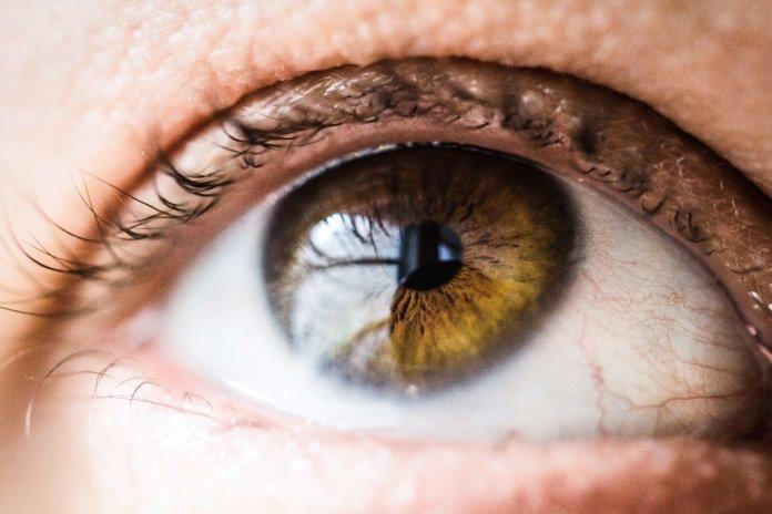 Hornhaut (Auge)