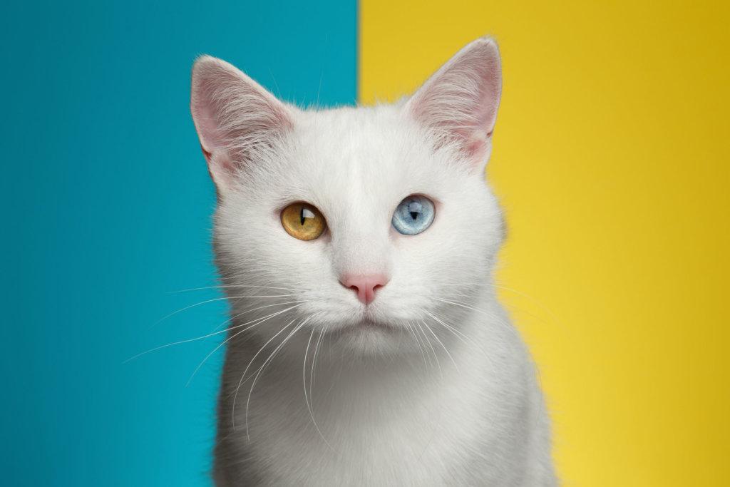 Augenfarben menschen mit 2 verschiedenen Wieviel Prozent